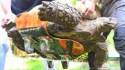 Cette tortue est incroyable, elle se déplace en skateboard
