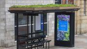 La ville de Leicester aménage ses abribus pour aider les abeilles