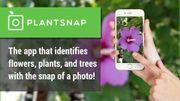 Test : quelle application choisir pour identifier une plante ?