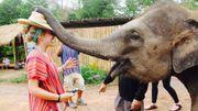 A quoi sert la trompe de l'éléphant ? Réponse de notre vétérinaire