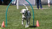 Du coaching canin pour Milou, Lassie, Scoubidou ou encore Belle!