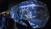 Boulogne-sur-Mer: le plus grand aquarium d'Europe va ouvrir en mai