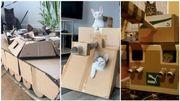 """Le nouveau challenge qui """"cartonne"""" : construire un tank en carton pour son chat"""
