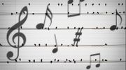 Ce groupe d'oiseaux interprète une œuvre éphémère à la guitare électrique