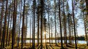 """Les forêts du """"Grand Nord"""" sont, elles aussi, menacées par le changement climatique"""
