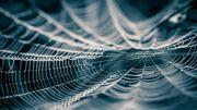 La toile d'araignée, une matière innovante en passe de révolutionner la mode ?