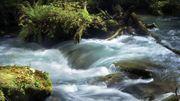 Les sons naturels sont bons pour la santé : eau qui coule, chants d'oiseaux...