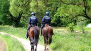 L'annonce peut surprendre, la police fédérale va engager une petite dizaine…de chevaux