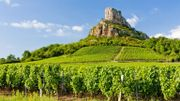 """La vigne de Bourgogne, """"marqueur du réchauffement climatique"""" selon une étude"""