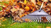 Réaliser son terreau de feuilles mortes... Une idée haute en couleur !