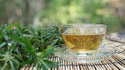 Restons zen… en buvant du thé au cannabis!
