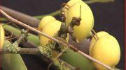 Une suspension pour l'automne : faite de branches séchées et de fructifications
