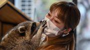 Les cafés d'animaux exotiques en Chine : iguane, raton laveur, serpent