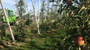 A Barry, 16 hectares de poires et 1 hectare et demi de pommes (bio)
