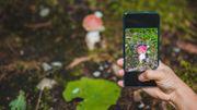 Attention, les applis cueillent parfois des champignons toxiques