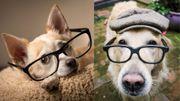Mais que regardent ces chiens curieux et si attendrissants?