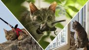 """L'expert du débat : """"Les personnes qui achètent un chat, achètent un petit tueur !"""""""