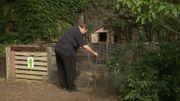 Les poules, soignées par Daniel un résident, consomment les déchets de la cuisine.