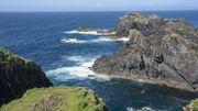 À la poursuite des baleines dans les Hébrides écossaises