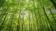 On décrypte l'effet albédo: les arbres causeraient-ils une partie du réchauffement climatique?