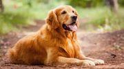 Votre chien n'aurait pas la mémoire aussi courte que ça...