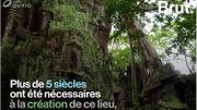 Au Cambodge, le temple Ta Prohm est le parfait mélange entre culture et nature