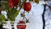Savez-vous vraiment d'où peuvent venir les tomates que vous mangez ?