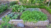 Un bon plan pour apprendre à cultiver votre potager
