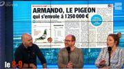 Armando, le pigeon qui s'envole à 1 250 000 € !