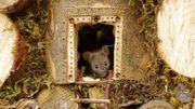 Des souris, un artiste... Deux destins qui font le cliché!