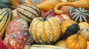 La Potironnerie vous invite à fêter les potirons fin septembre