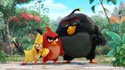 """Premier aperçu du film """"Angry Birds"""""""