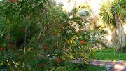A Nice, le jardin botanique