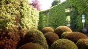 Meirlaenhof, un jardin structuré et fleuri
