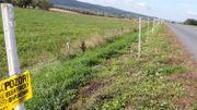 """La Tchéquie a installé des clôtures, électriques ou avec des répulsifs autour de la zone """"infestée"""" de 57 km2."""