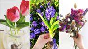Slow flowers: découvrez les vertus de ces fleurs locales et de saison