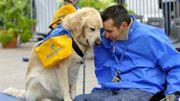 Les chiens, une véritable aide pour les personnes handicapées