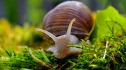 Ce dimanche aura lieu à Visé la 3ème Journée de l'escargot et du coquillage