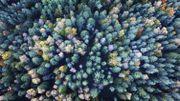 Le palmarès 2018 des villes les plus vertes