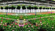 Composition de jardinières colorées aux pépinières Halleux à Bassenge