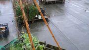 Un potager sur un toit bitumé de Bruxelles : le petit peuple des toits