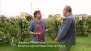 Peas and love - contraintes techniques