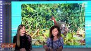 Un phénomène unique : le Râle de Cuvier d' Aldabra fait sa ré-apparition