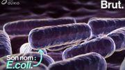 E.coli, une bactérie pleine de secrets
