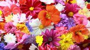 Nos fleuristes préférés en province de Liège