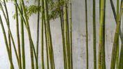 Les plantes Feng Shui qui favorisent les bonnes énergies à la maison
