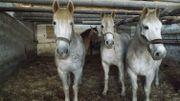 4 chevaux errants interceptés par la police en pleine nuit dans les rues de Seraing