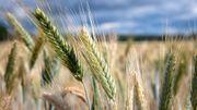 Où cultive-t-on le plus de produits bio en Europe ?