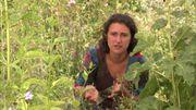 Un refuge pour la biodiversité en région Huttoise