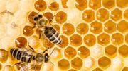 Il est apiculteur, producteur de savon à base de miel... Et allergique aux piqures d'abeilles!